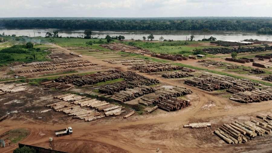 Die Ausbeutung der Urwälder: Kann ein Öko-Siegel die Forstindustrie stoppen