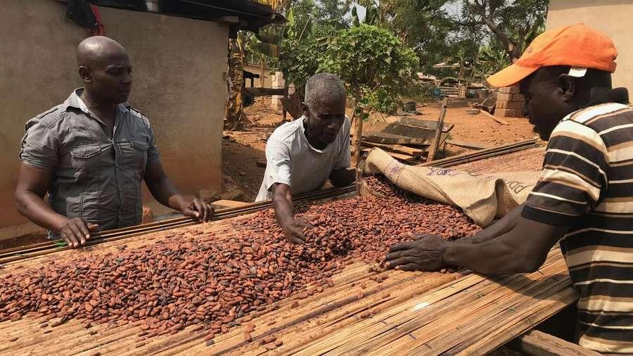 Schokolade ohne Reue - Ist fairer Genuss möglich?